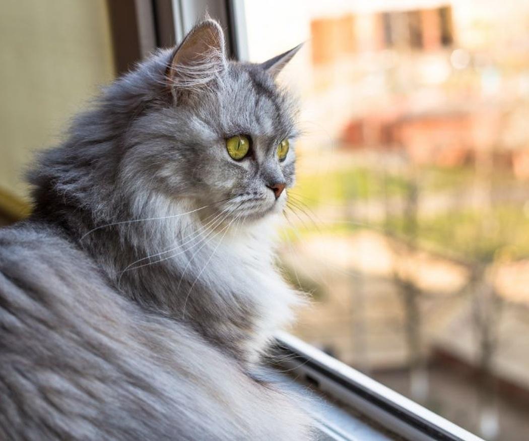 Evita el estrés en tu gato