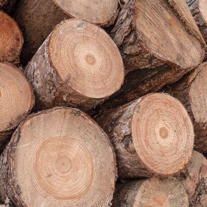 Las ventajas de usar maderas de castaño