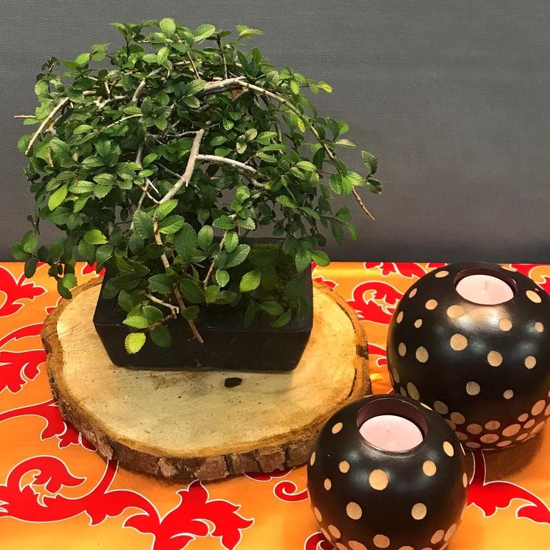 bonsai zelkova 6 años : PRODUCTOS de Flores Madrid