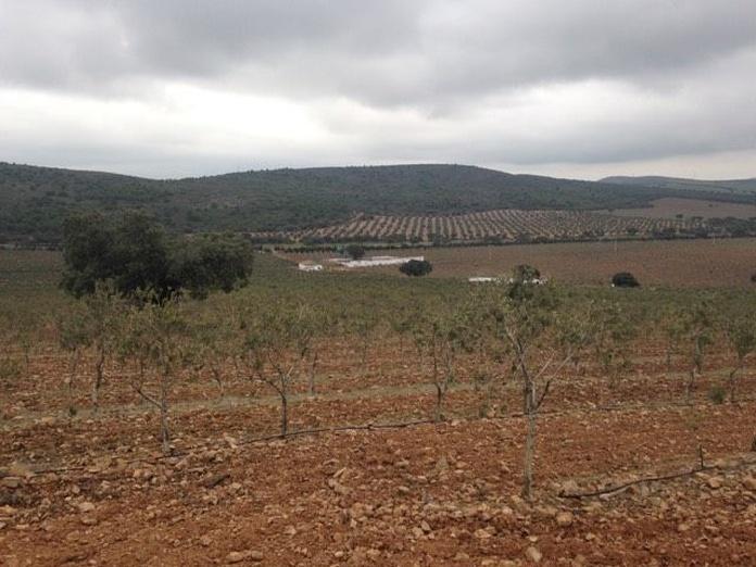 83 hectáreas de Olivar en intensivo: Inmuebles Urbanos de ANTONIO ARAGONÉS DÍAZ PAVÓN