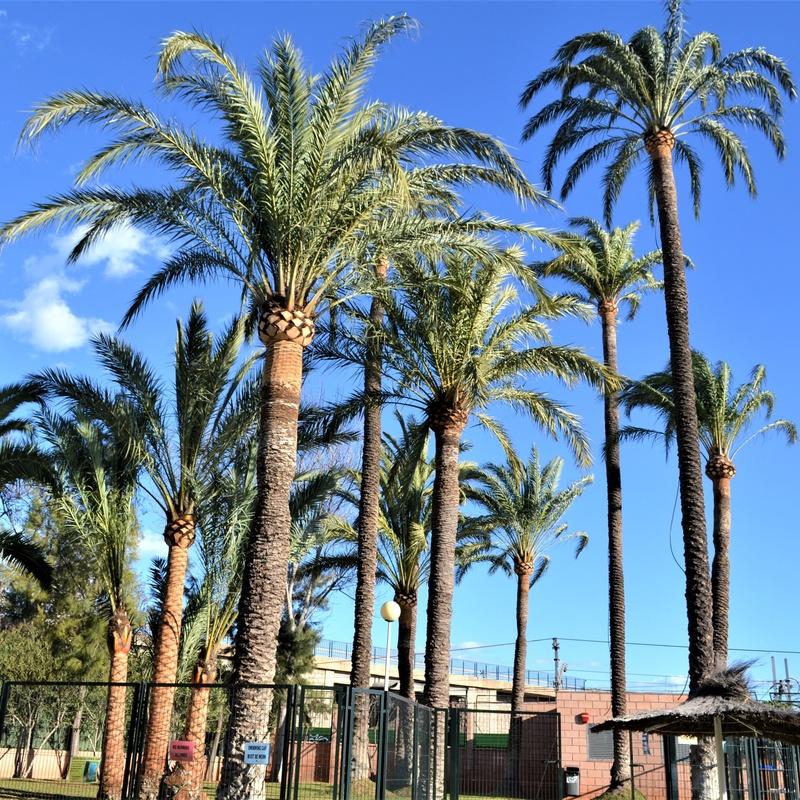 Poda de árboles ornamentales y palmeras: servicios de Podavalti