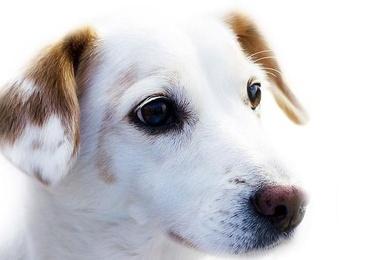 Dermatología veterinaria