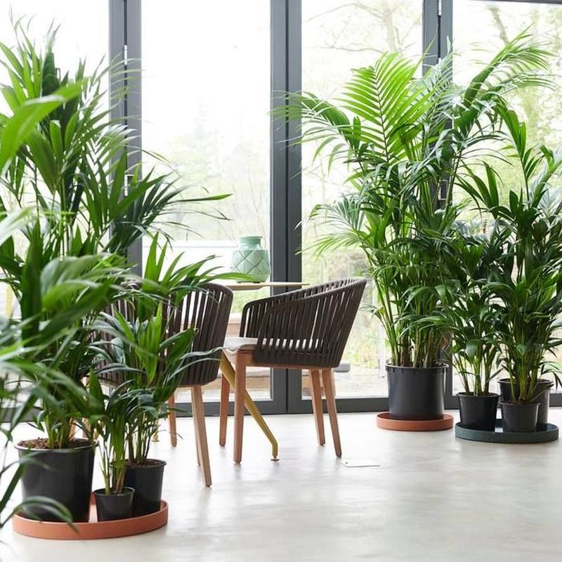 Abonos: Productos y servicios de Eiviss Garden