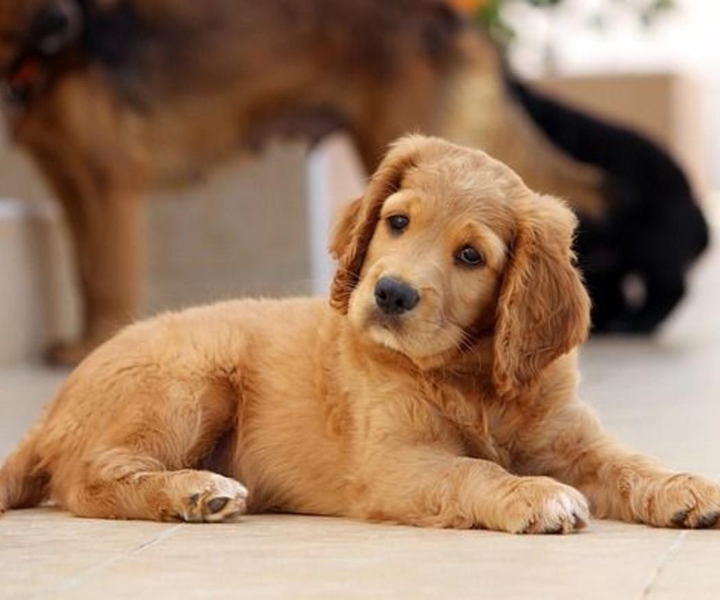 ¿Qué es la dermatitis canina?