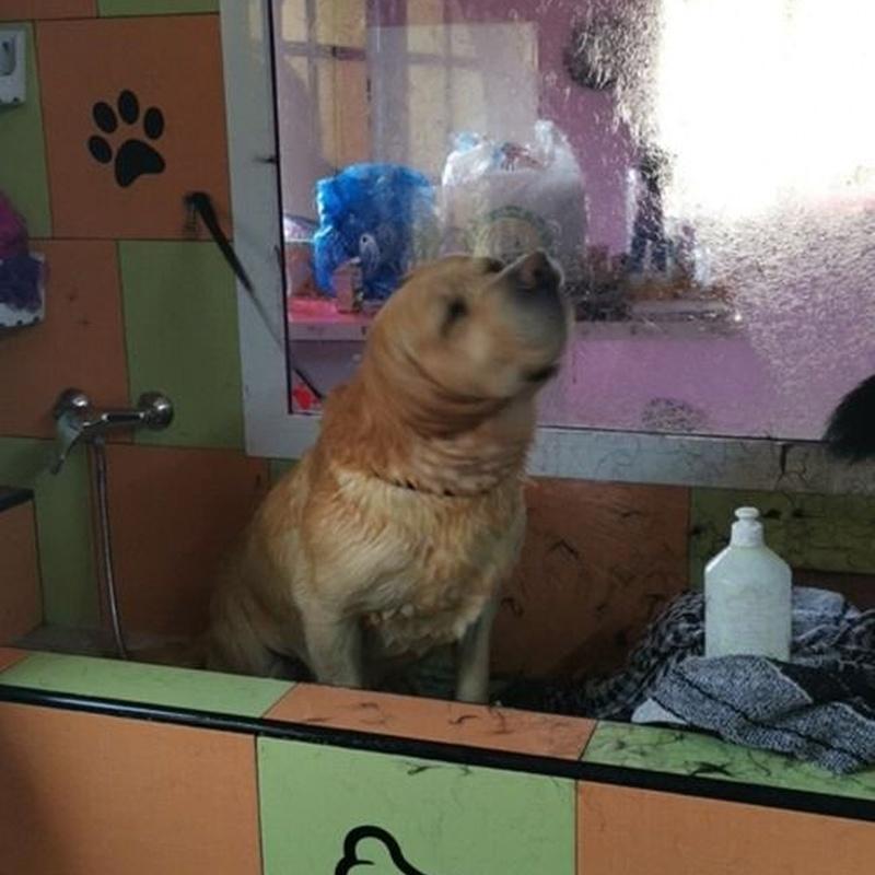 Instalaciones: Servicios de Nueva Enseñanza Escuela Canina