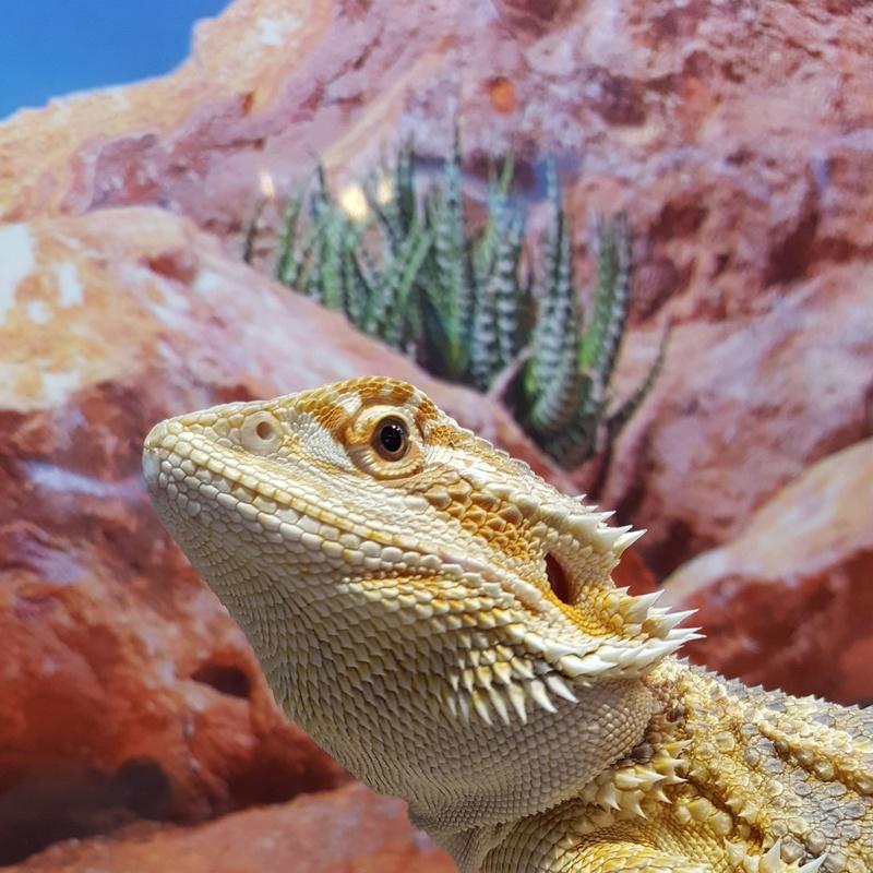 Alimento congelado: Catálogo de Reptil Parc