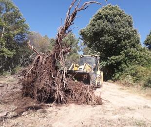 Trabajos en zonas forestales