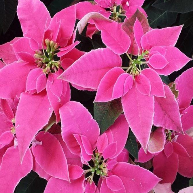 Tres plantas de floración invernal