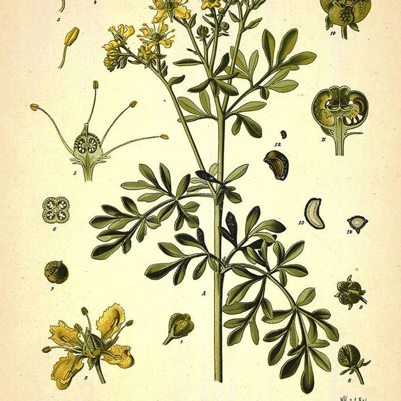 Botánica: catalogo de 4 INGLETES BRAVO MURILLO