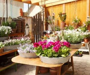 Todos los productos y servicios de Plantas de interior y exterior: El Jardín de tu Casa