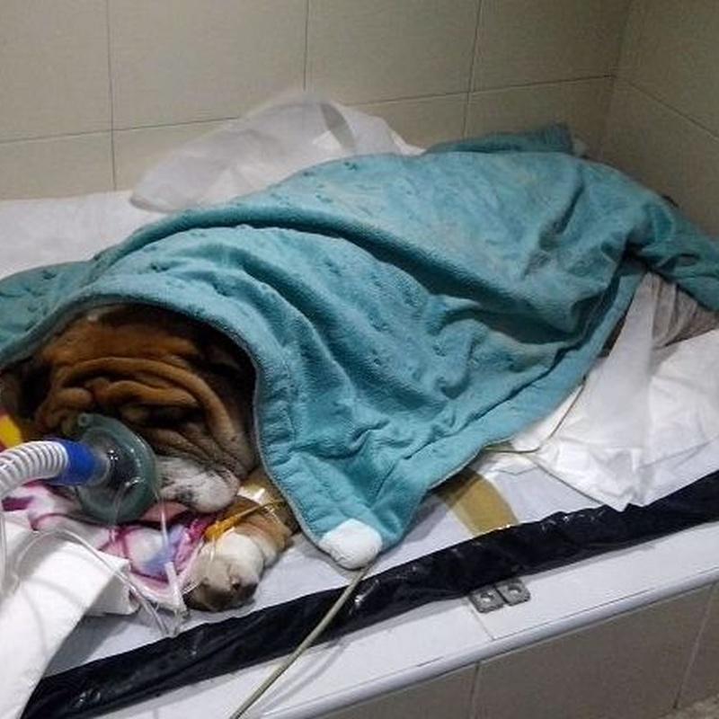 Hospitalización: Servicios de Sa Indioteria Clínica Veterinaria