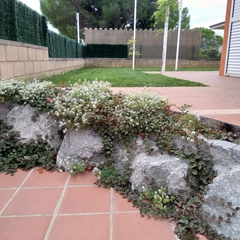Diseño de jardines: Servicios  de Jardinería Garrotxa