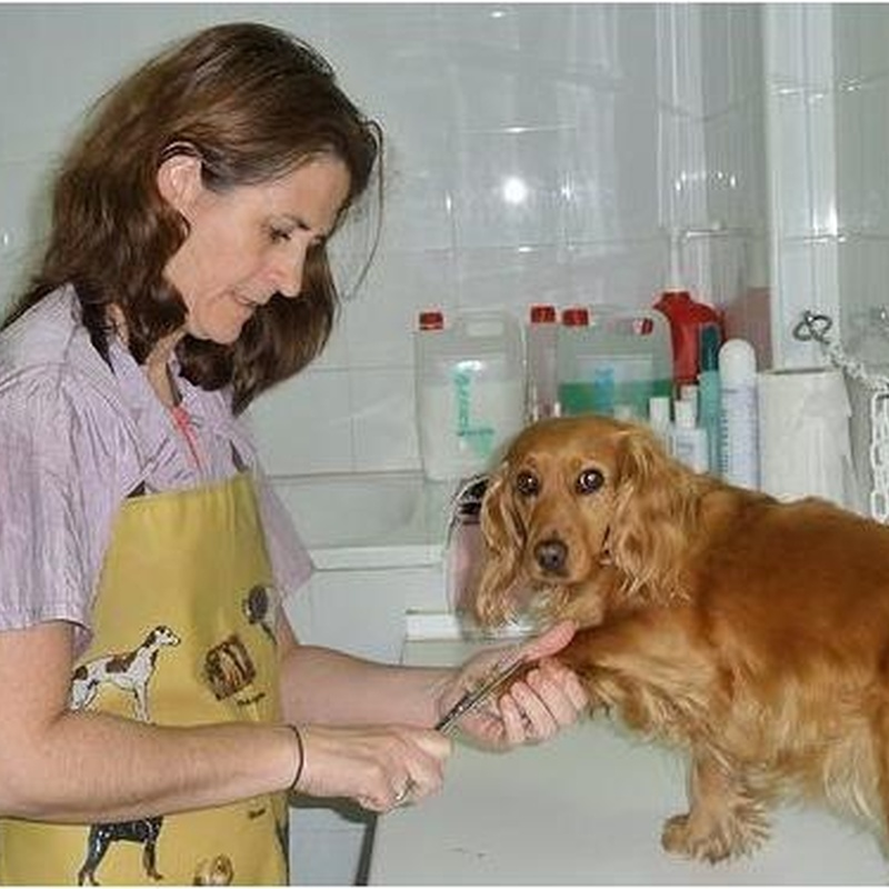 Higiene y estética de su mascota en Clínica Veterinaria Huellas