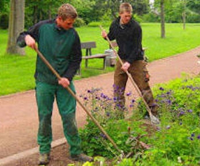 Servicio de jardinería: Servicios de Limpiezas Elvira