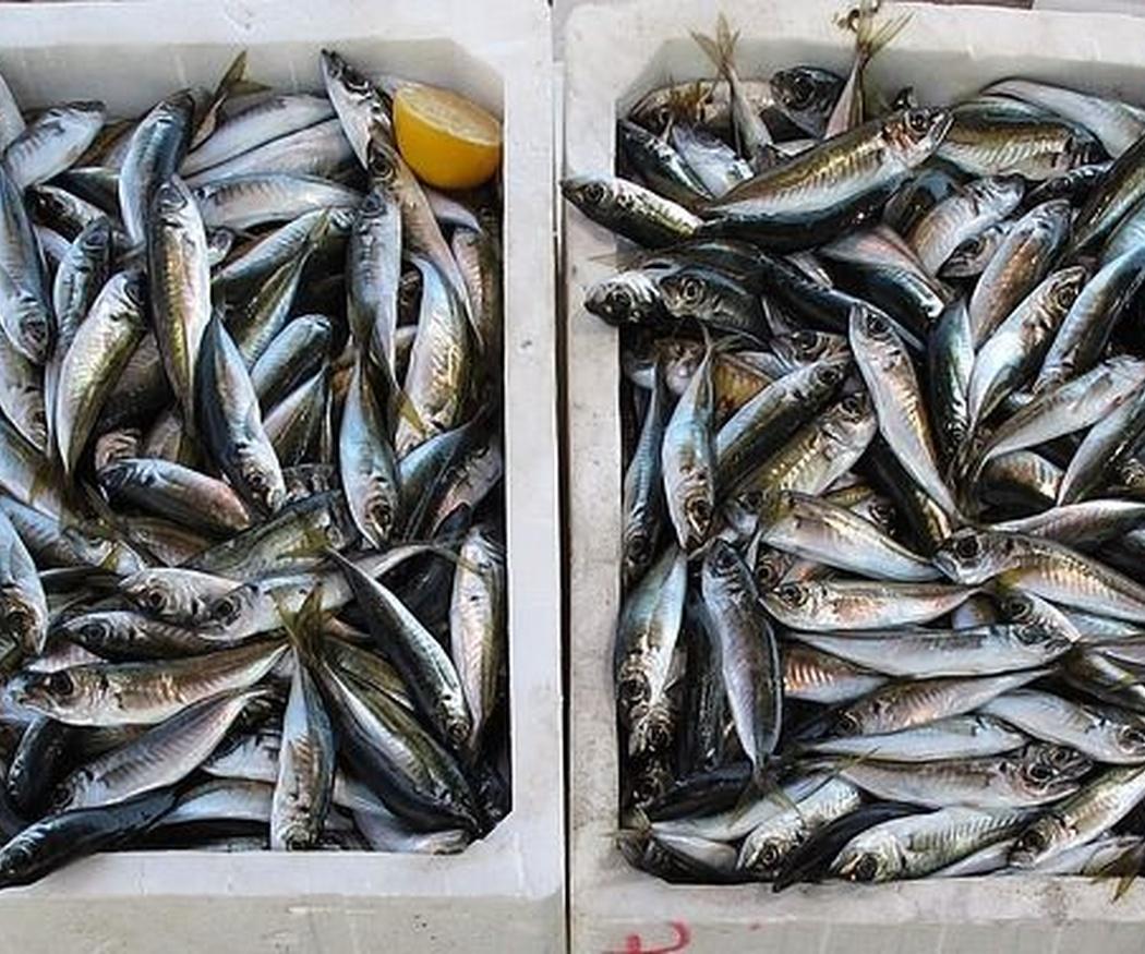 Los pescados de Ibiza según temporada