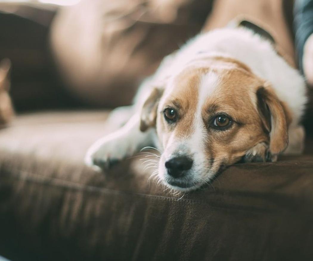 Ventajas de los perros para los ancianos