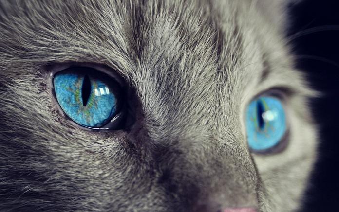 Veterinario para gatos en Oviedo