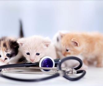 Visitas a domicilio: Servicios especializados de Clínica Veterinaria Rosvet