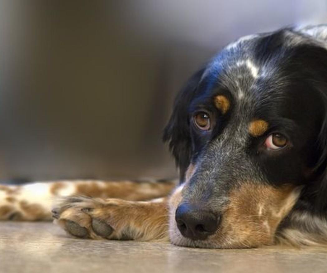 Alimentos que tu perro nunca debe comer
