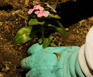 Servicios integrales de jardinería para particulares, comunidades y empresas en Elda