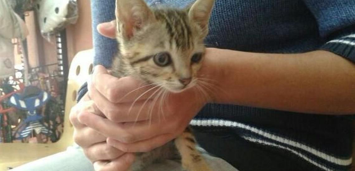 Esterilización de gatos en Calpe de confianza