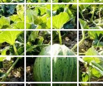 Semillas: Productos de Semiagro