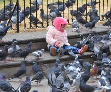 El problema de las aves de ciudad.