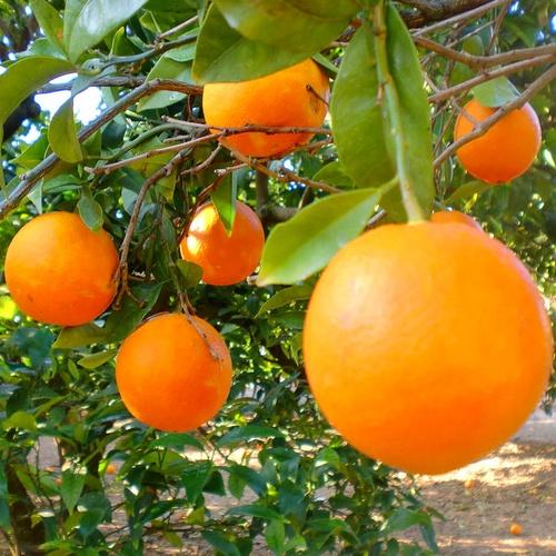 Aroma Natural de Naranja