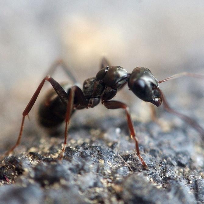 El peligro de las termitas