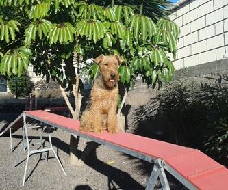 Snacks para perros: Productos y servicios de Don Perro