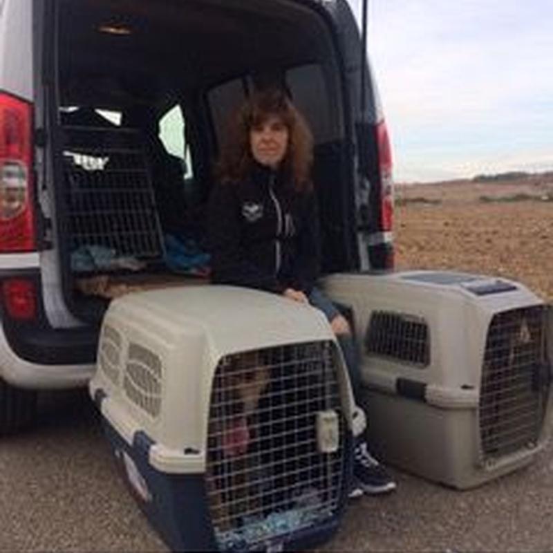 Transportes especializados: Servicios de Sistema Integral de Mascotas - SIM