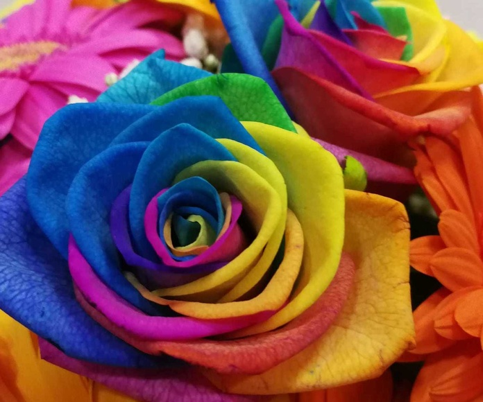 Rosas arcoiris, Rosas Rainbow, Rosas online, Comprar rosas, regalar rosas, envio de rosa, Comprar rosas Palma de Mallorca, Floristeria online, Floristeria rosas Mallorca, Rosas para regalar, Enviar ramo de rosas, comprar ramo de rosas, rosas para regalar