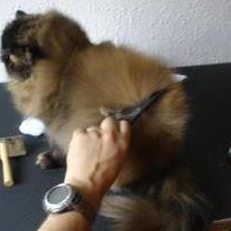 Peluquería felina
