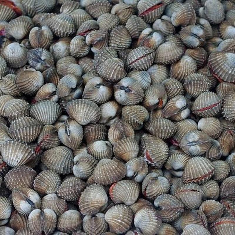 Moluscos: Pescados y mariscos de Pescadería Motrileña