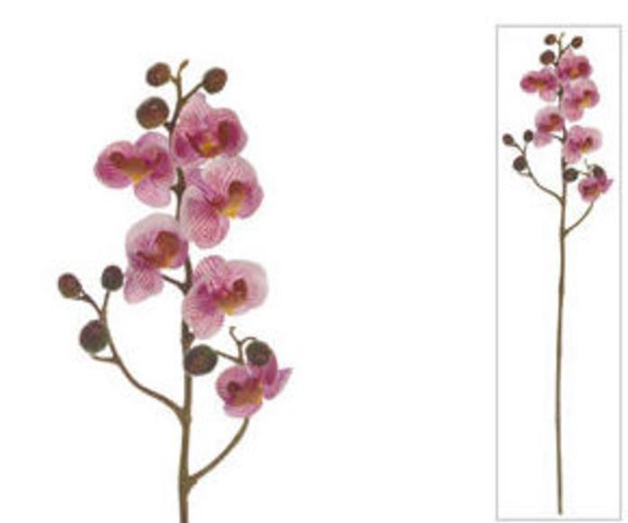 Orquídea X 6