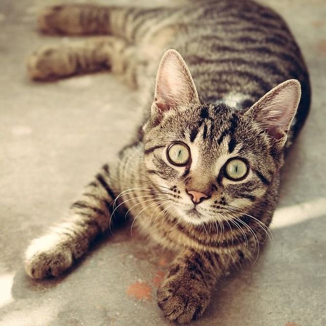 El estrés en los gatos: síntomas, causas y posibles soluciones