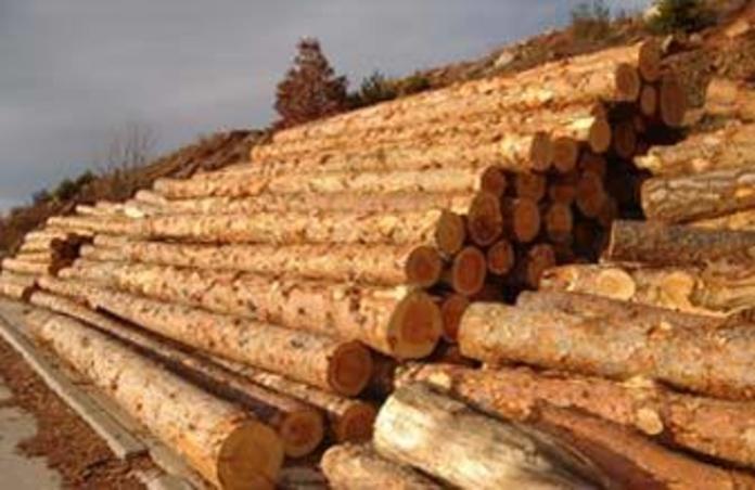 Pino Soria Burgos: Productos de Maderas Rupérez