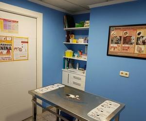 Fotos de Veterinarios en Albacete | Clínica Veterinaria El Pilar