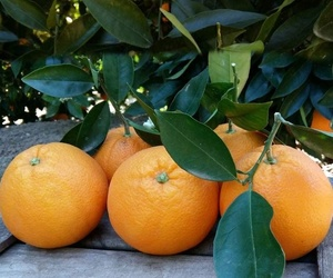 Naranjas a domicilio Gerona