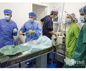 Laparoscopia veterinaria en Cuenca