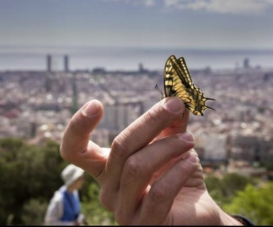 Los científicos españoles alertan sobre el declive de los insectos