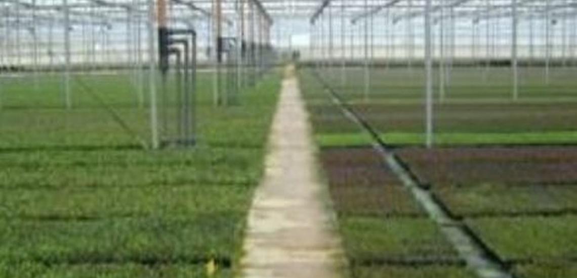 Tratamiento de desinfección de agua para riegos en Huelva