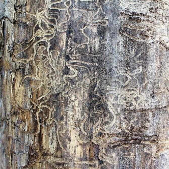 Las termitas, una estructura social bien definida