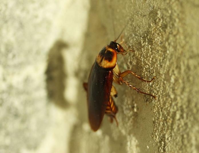 Alergenos y cucarachas