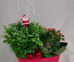 Arreglo de plantas navideño