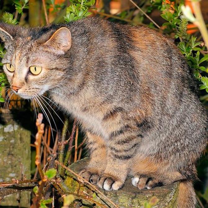Las enfermedades infecciosas más comunes en los gatos