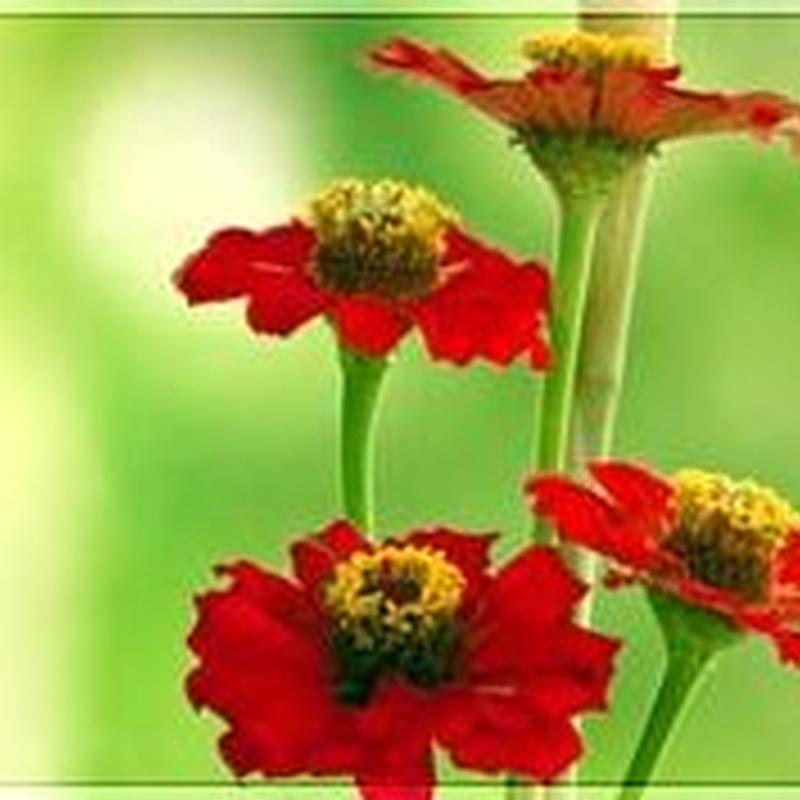 Perfumes: Productos de Herbolario San Bernardo122