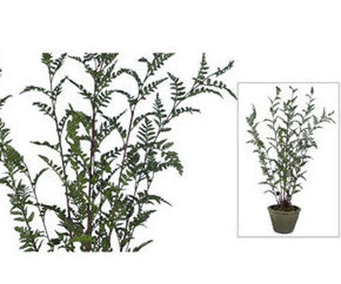 Planta Fern con maceta