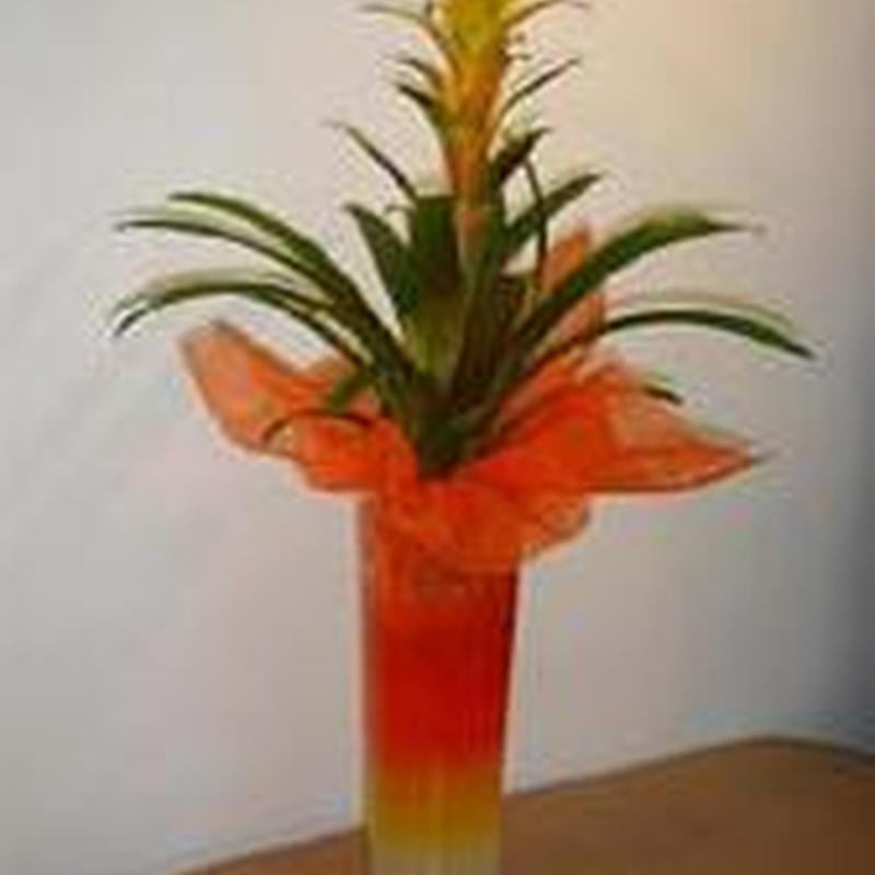 Plantas: Catálogo de Cardona Flors i Plantes