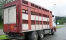 Empresa de transporte de ganado en Vizcaya